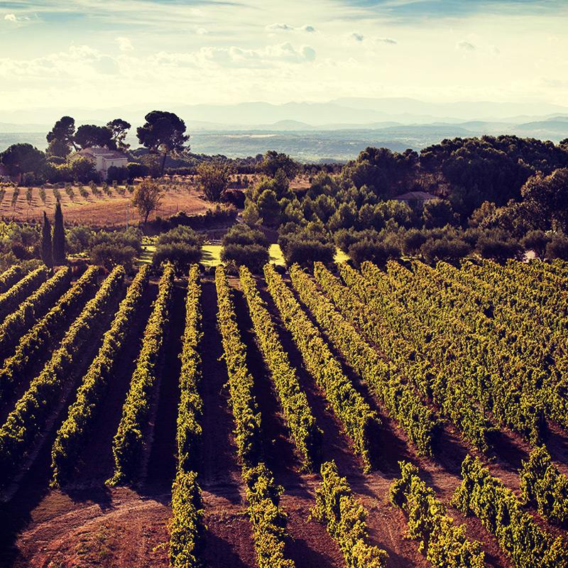 Petit Languedoc